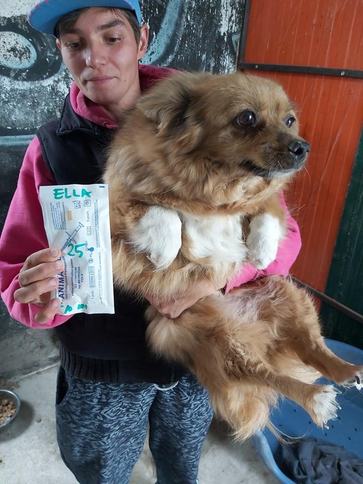 ELLA - Femelle croisée Pékinois de petite taille (10 kg) - née en juillet 2009 - adoptée par Nathalie (60)  66450110