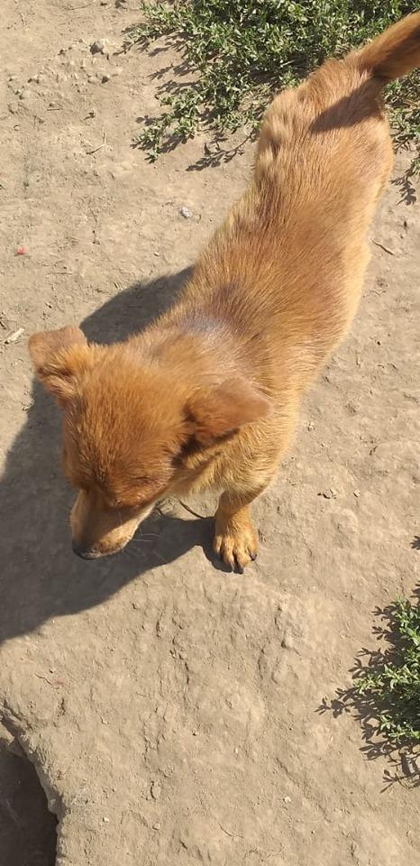 POTIRON - Gentil mâle croisé de petite taille - Né environ juin 2018 - REMEMBER ME LAND - Adopté par Ludivine (94)  67285710