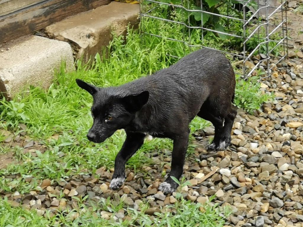 LUCIE - Jolie femelle croisée de petite taille, née en 2016 - REMEMBER ME LAND PASCANI - en FA chez VIRGINIE (30) Captur22