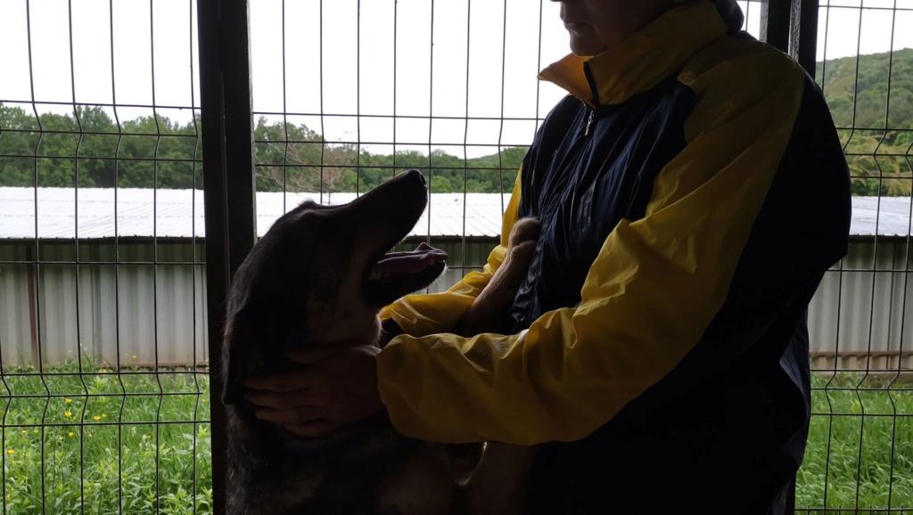 WOLF !! Plus de 3 ans de box !!  mâle croisé berger - grande taille - né env 2014 (PASCANI) - REMEMBER ME LAND - Page 4 Wolf110