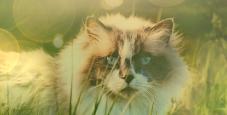 Warrior-Katzen wir suchen dich!  Test10