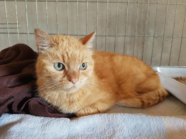 Vive d'Or, mamie chat de 14 ans 35564310