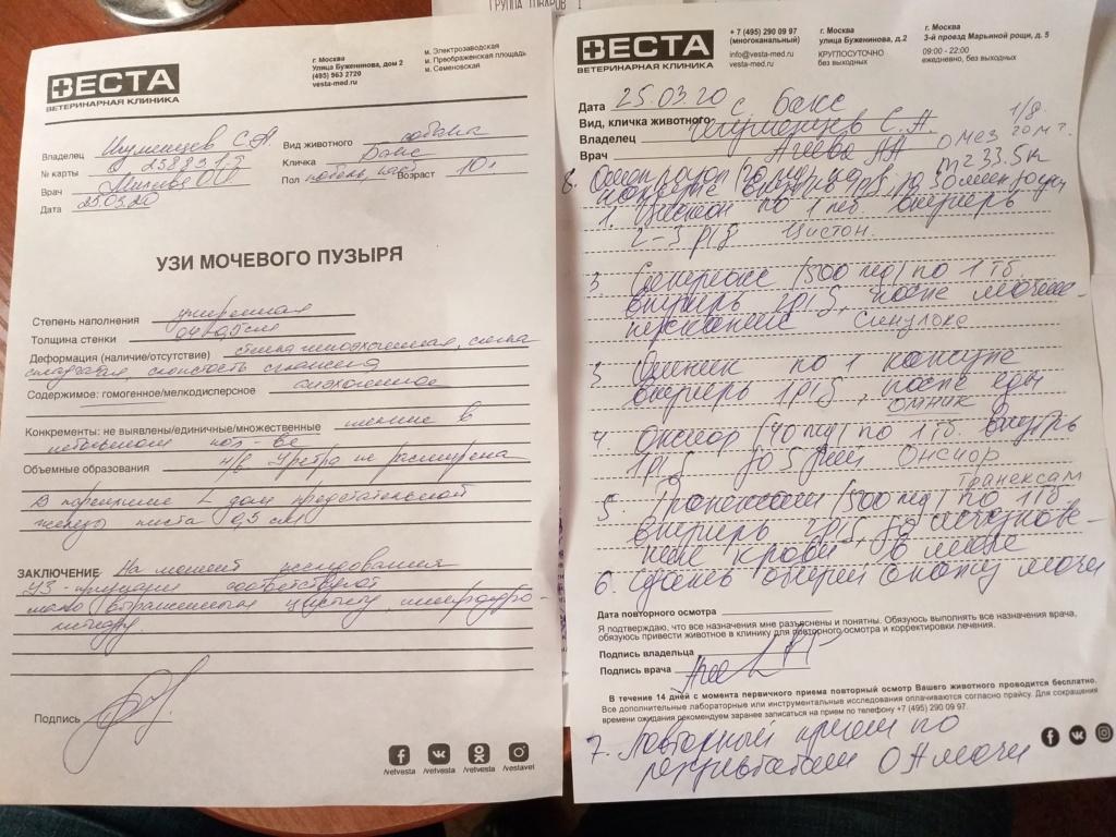 Москва, Бакс, кобель, 02.06.2010 - Страница 12 20200317