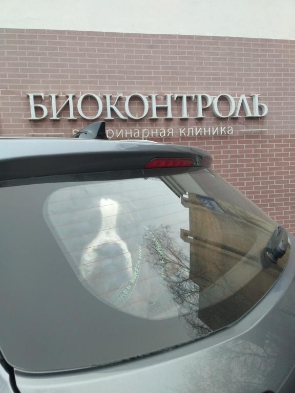 Москва, Бакс, кобель, 02.06.2010 - Страница 16 20210317