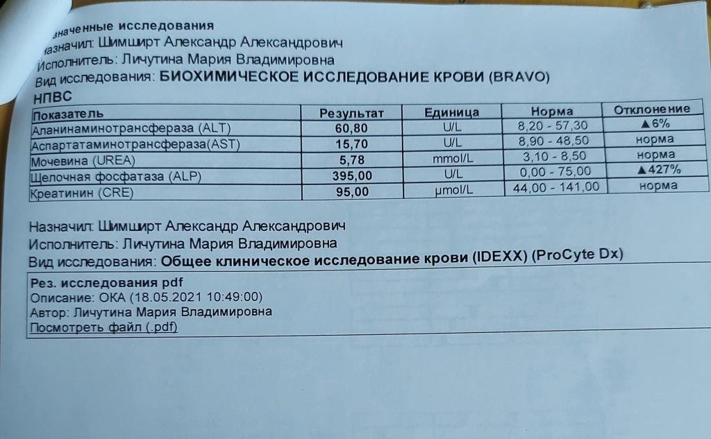 Москва, Бакс, кобель, 02.06.2010 - Страница 17 20210516