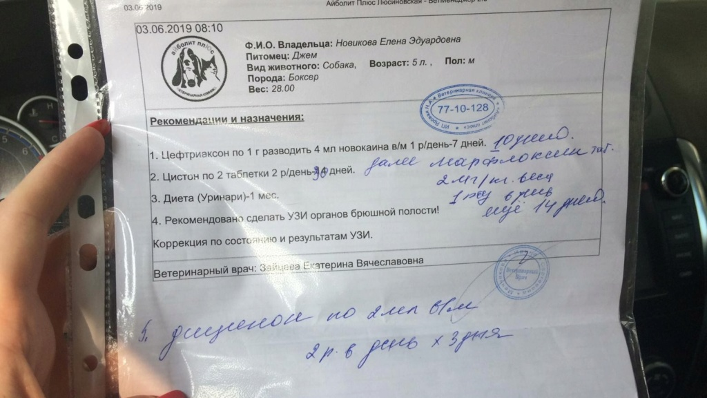 Москва, Джеф, кобель, 11.10.2013 Rwrh8j10