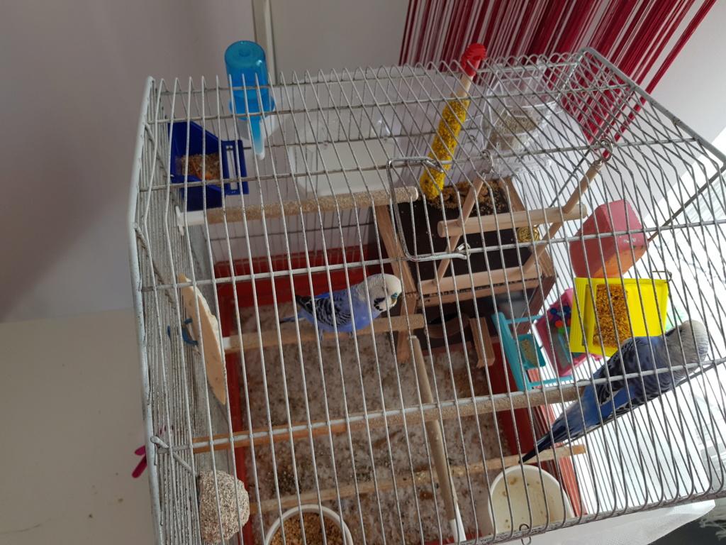 Aménagement cage. 20180818