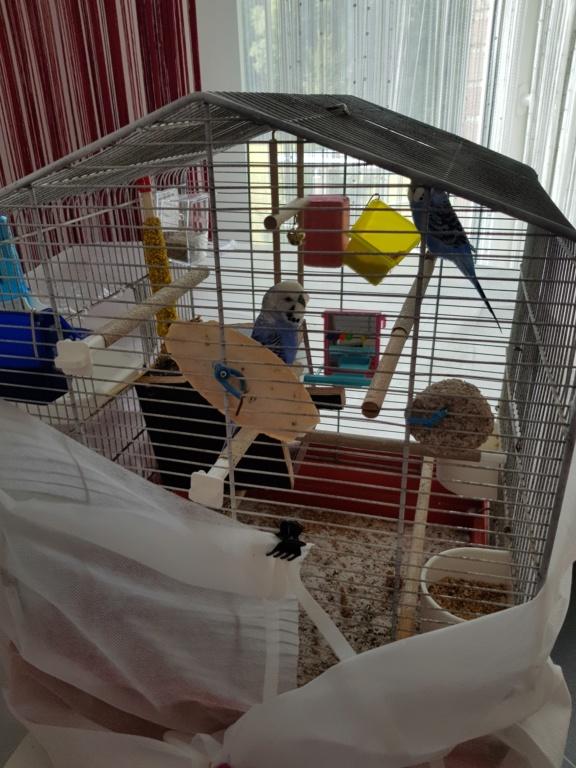 Aménagement cage. 20180819