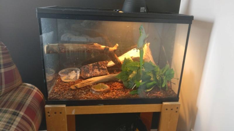 Lumières pour un Day Gecko??? 50434611