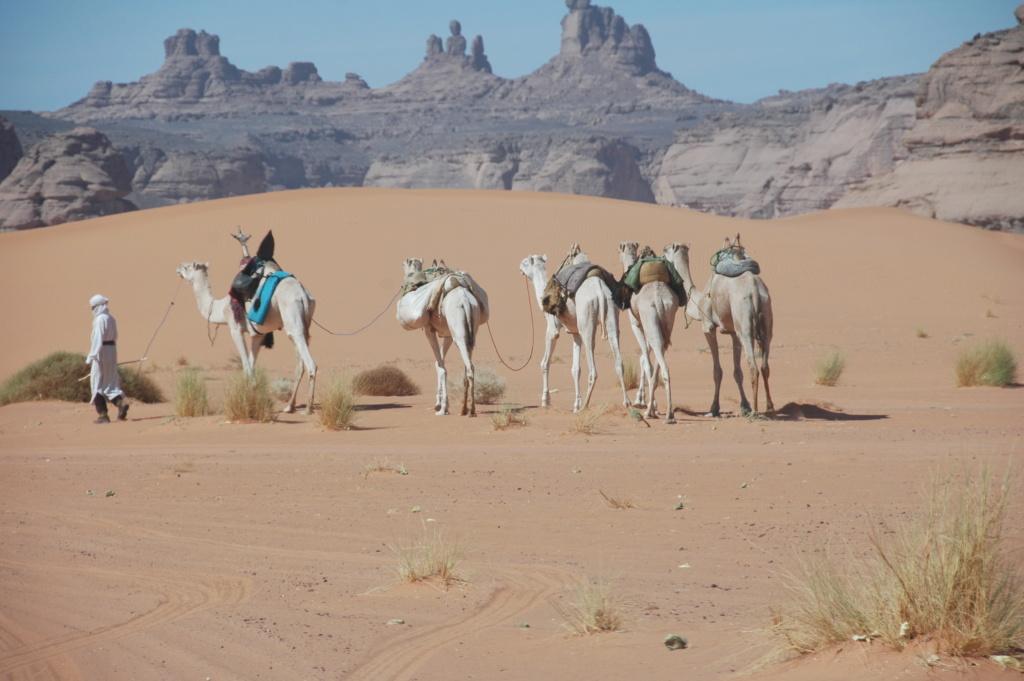 LIBYE 2008 Dsc_5411