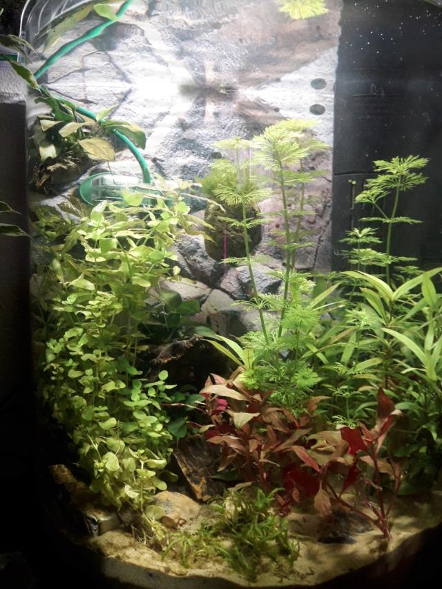 Lancement d'un aquarium de 60 litres 20200111