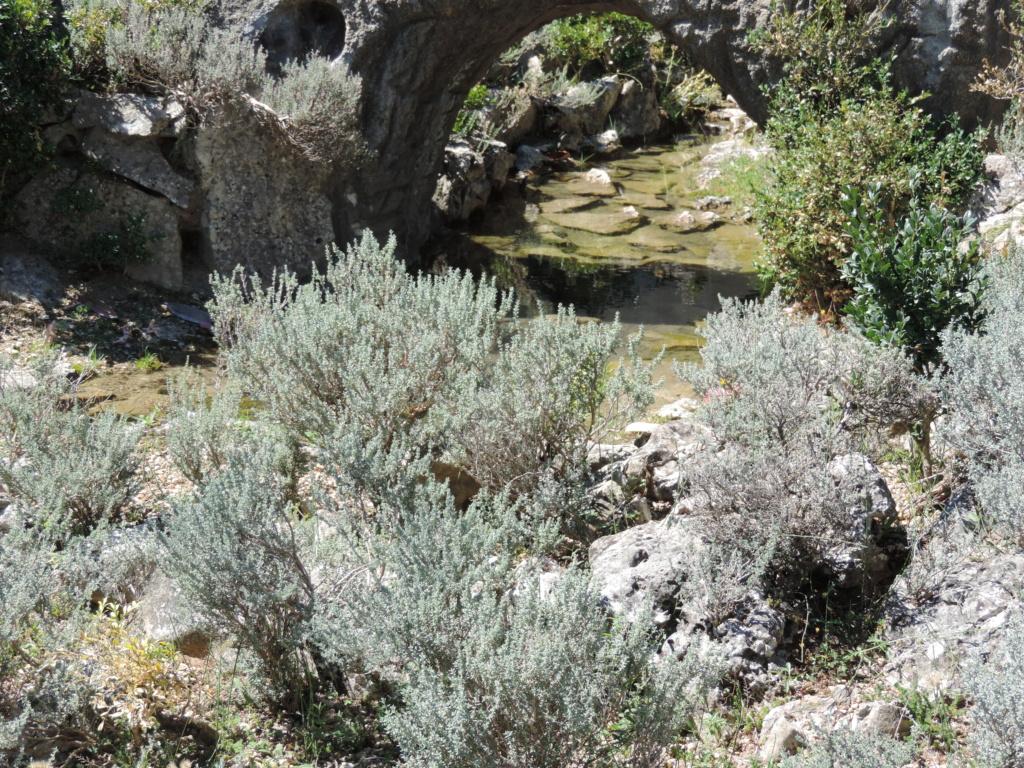 L'Ardèche dans sa splendeur  - Page 4 02810