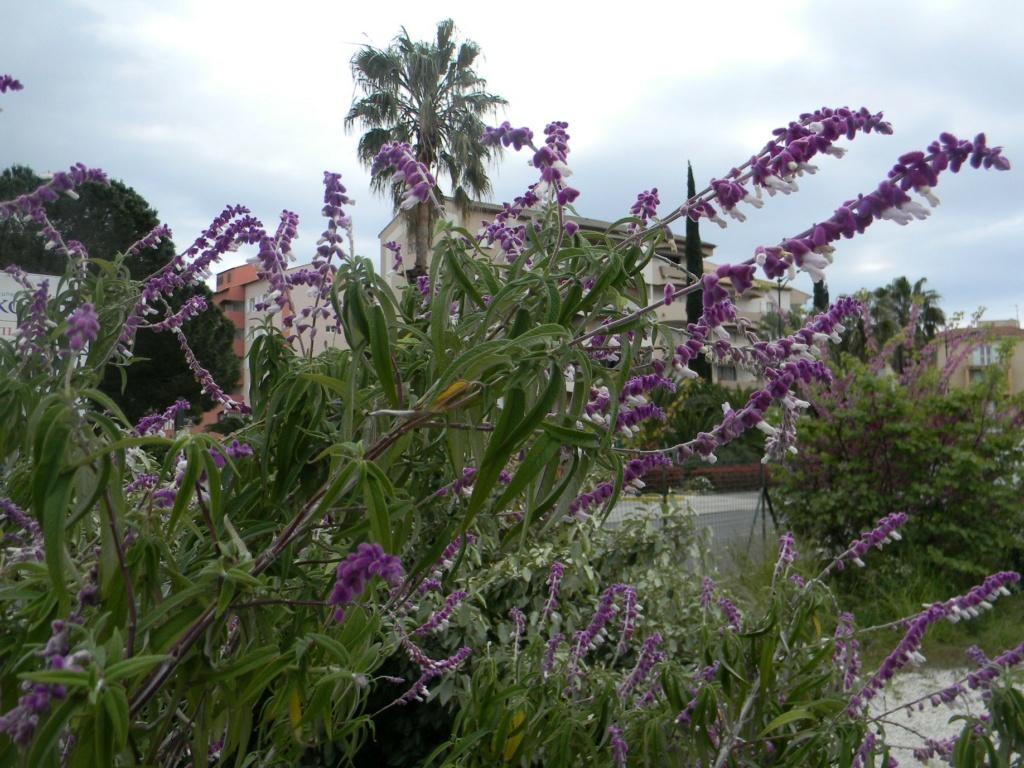 Sur la voie Olbia à Hyères les palmiers  23_04_42