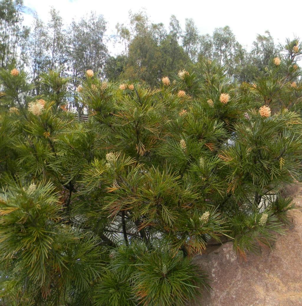 Sur la voie Olbia à Hyères les palmiers  23_04_51