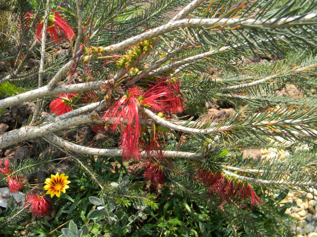 Sur la voie Olbia à Hyères les palmiers  39210