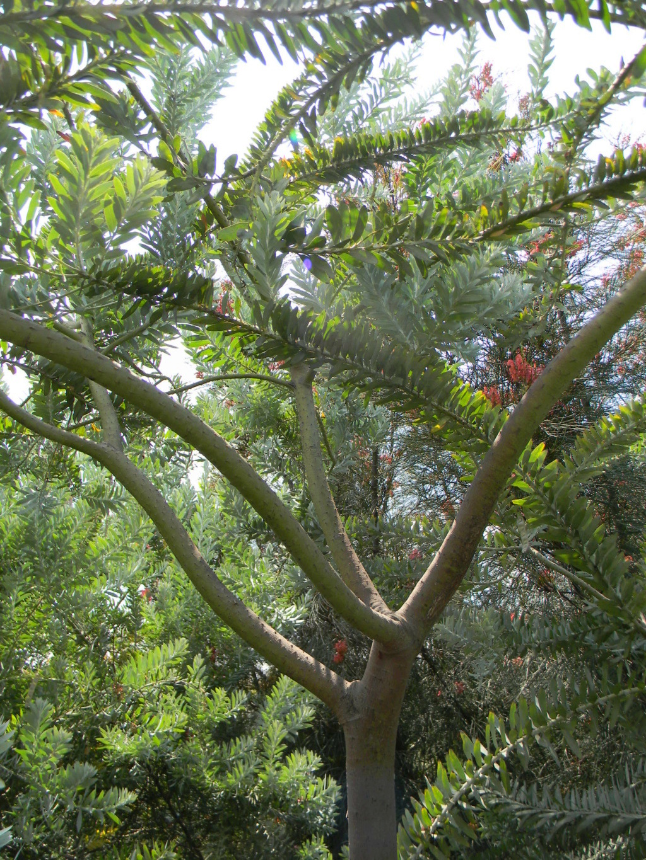 Sur la voie Olbia à Hyères les palmiers  40010