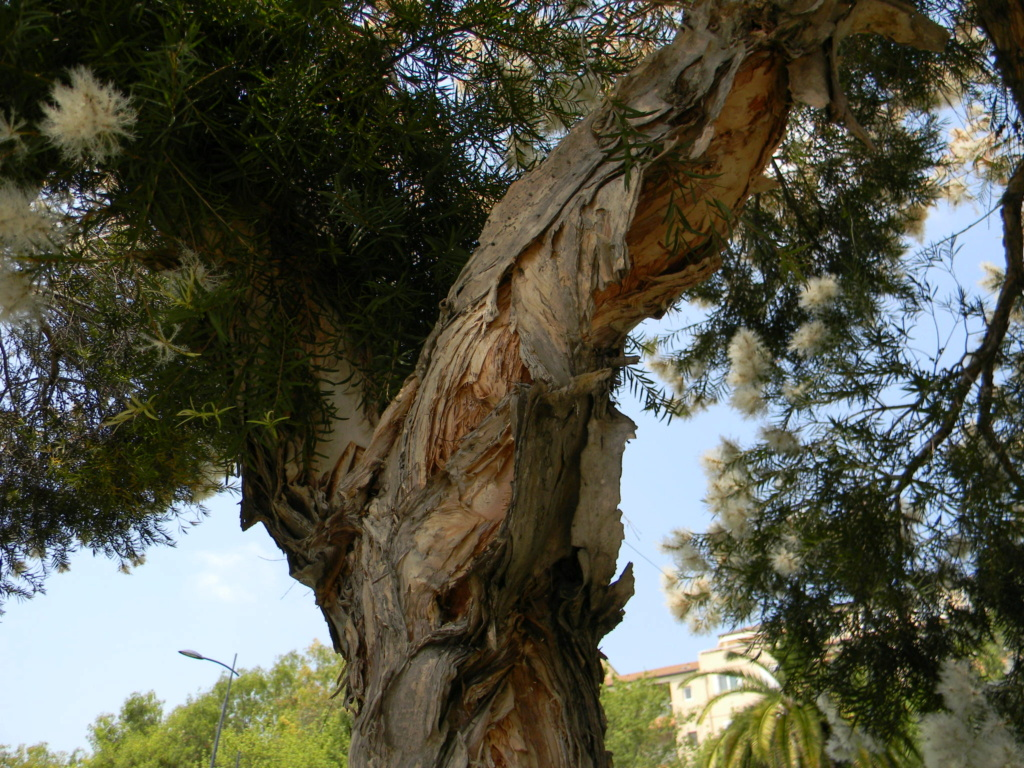 Sur la voie Olbia à Hyères les palmiers  41010