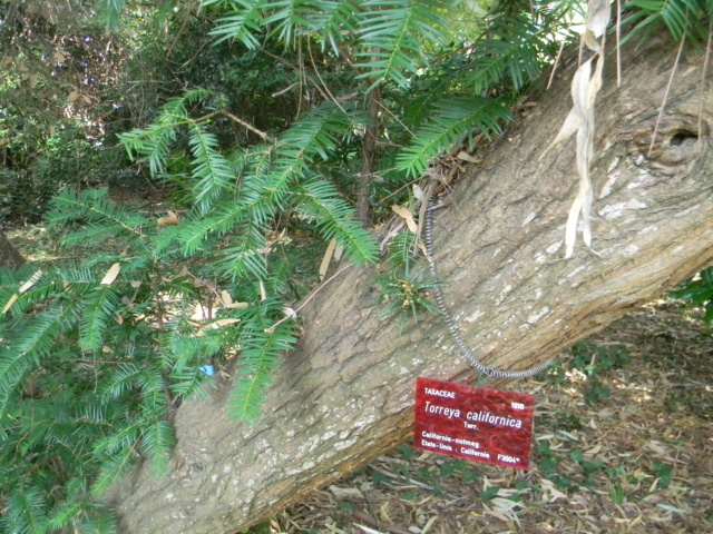 (06) Jardin botanique de la Villa Thuret - Antibes Antibe12