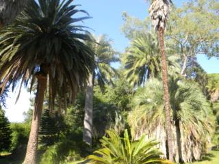 (06) Jardin botanique de la Villa Thuret - Antibes Antibe15