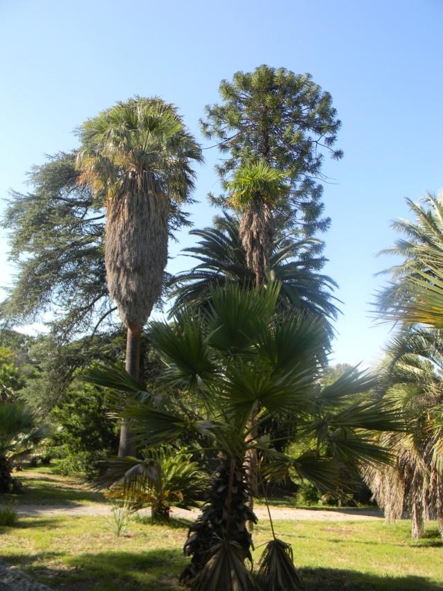 (06) Jardin botanique de la Villa Thuret - Antibes Antibe16