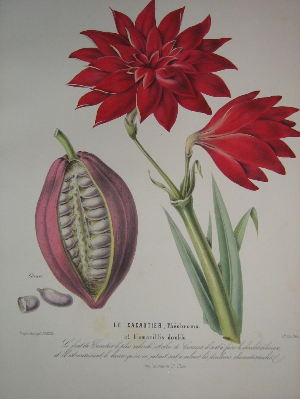 Les botanistes  Balagu11