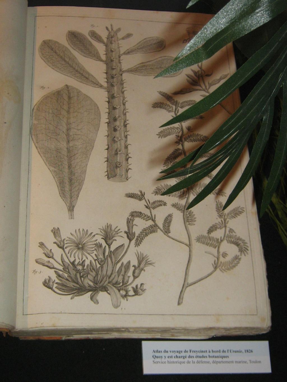 Les botanistes  Balagu15