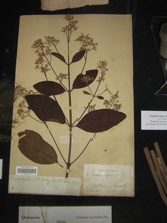 Les botanistes  - Page 3 Balagu27