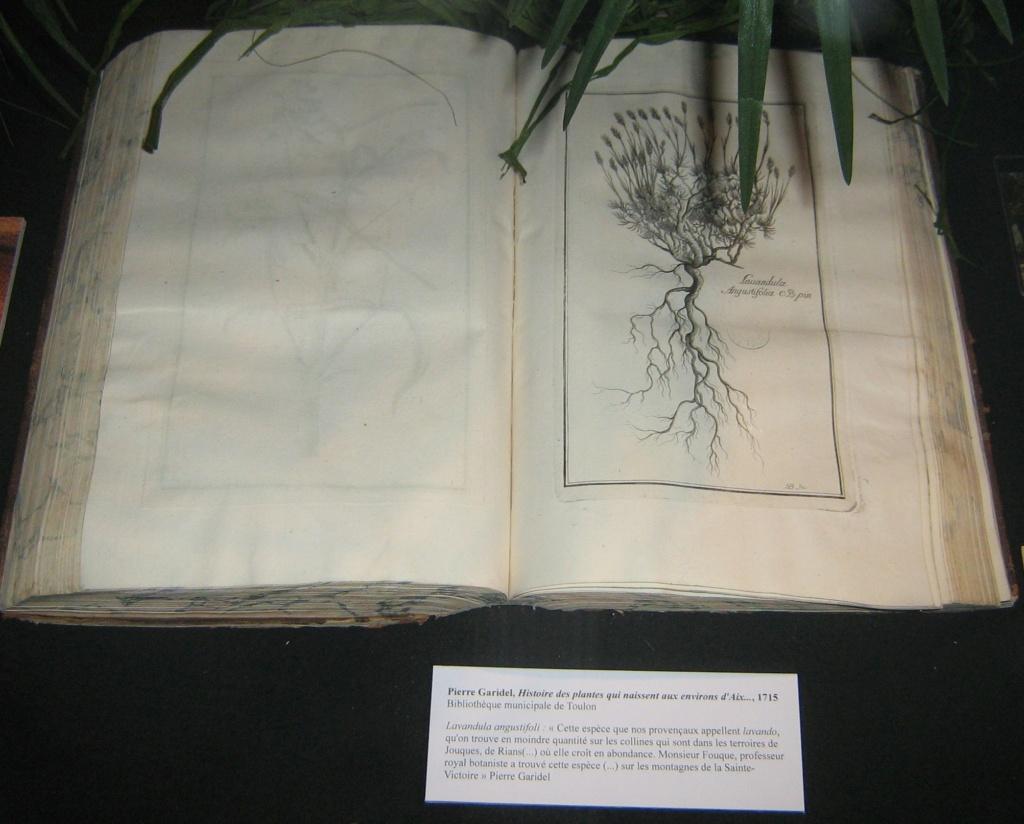 Les botanistes  - Page 4 Balagu57