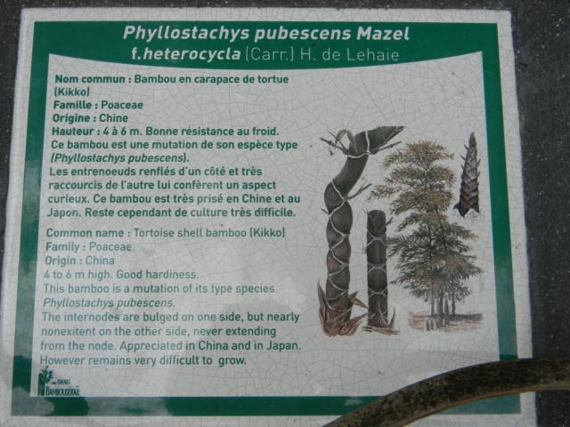 (30) La Bambouseraie d'Anduze - Page 4 Bambou26