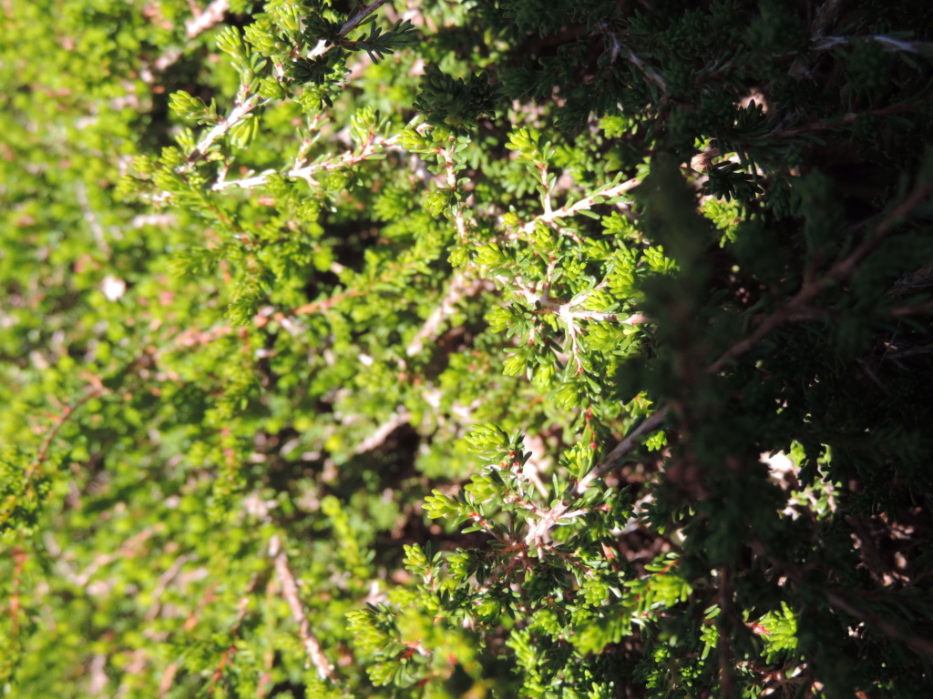 (83) Parc Gonzalez - Bormes-les-Mimosas  Bormes12