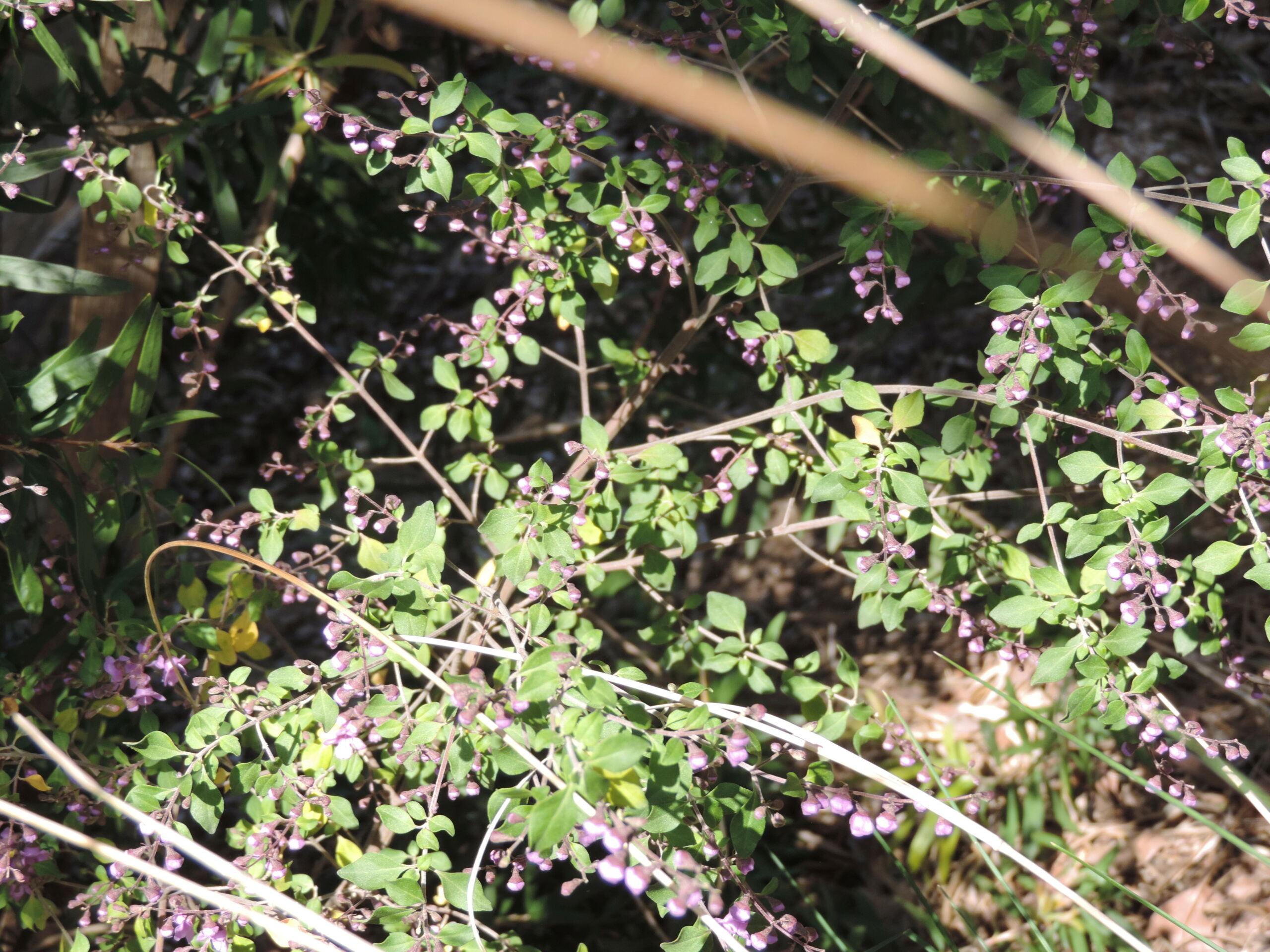 (83) Parc Gonzalez - Bormes-les-Mimosas  Bormes24