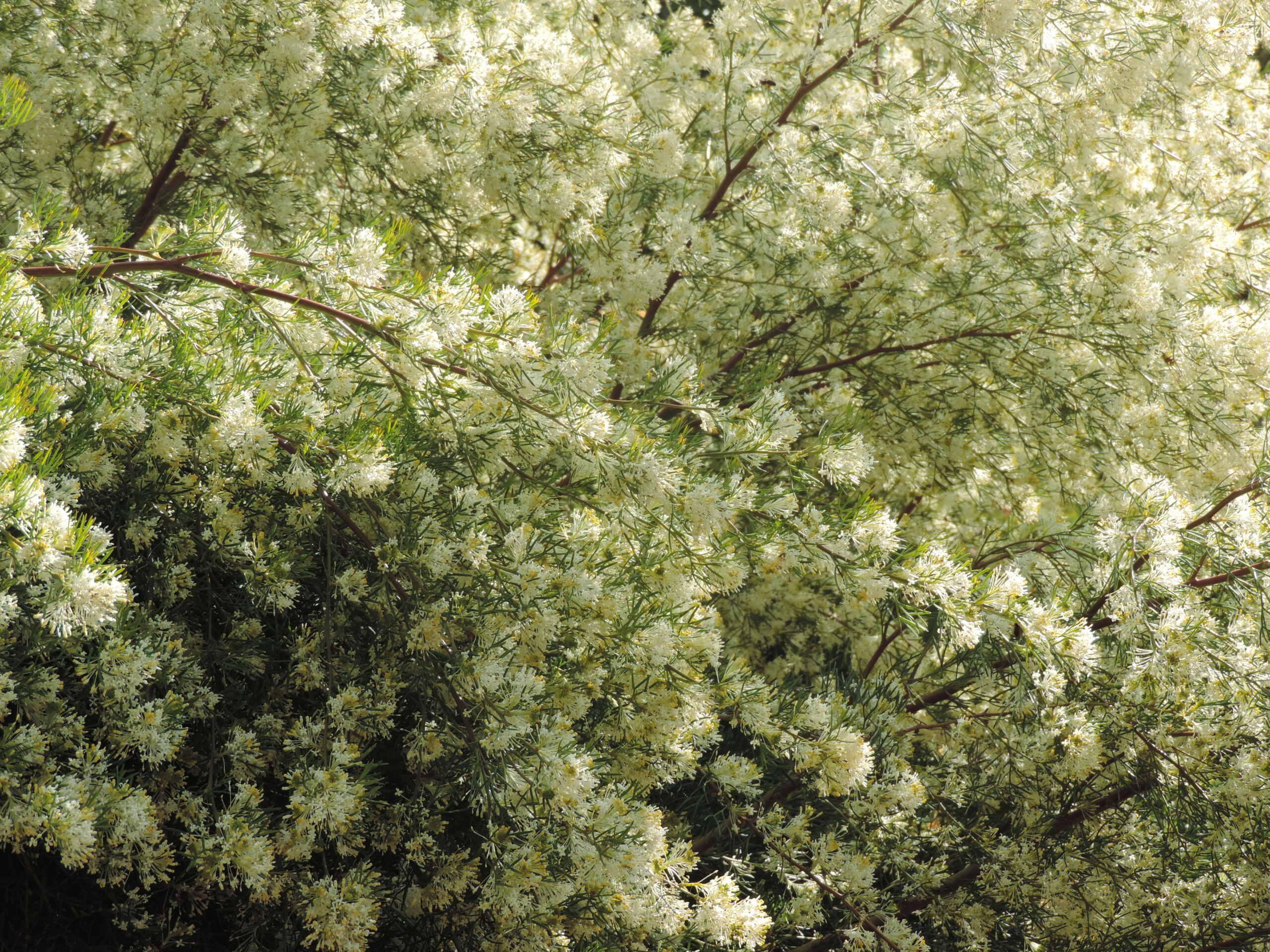 (83) Parc Gonzalez - Bormes-les-Mimosas  Bormes25