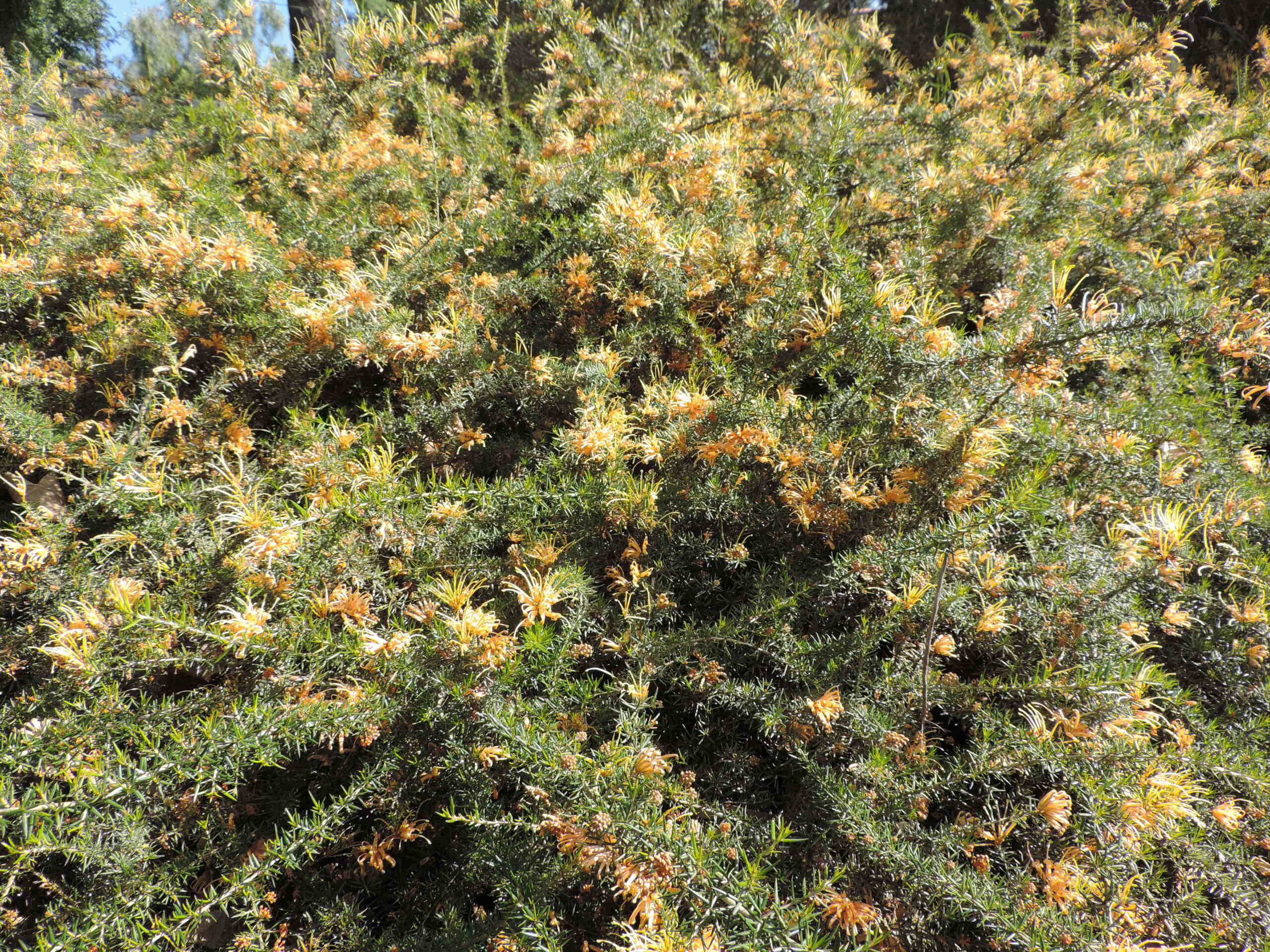 (83) Parc Gonzalez - Bormes-les-Mimosas  Bormes26