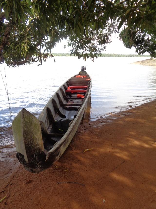 La Guyane en 2018  - Page 5 Dsc00819