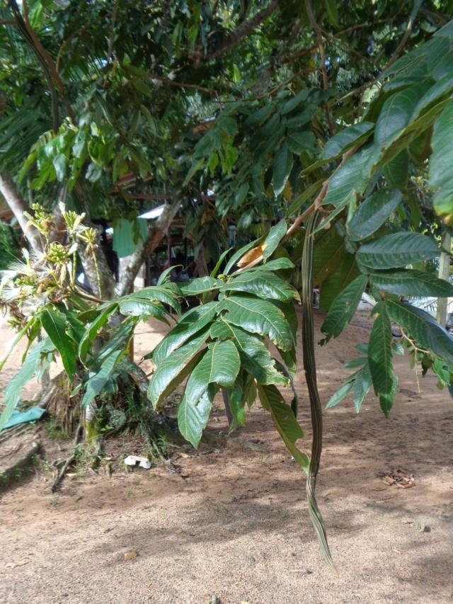 La Guyane en 2018  - Page 5 Dsc00824