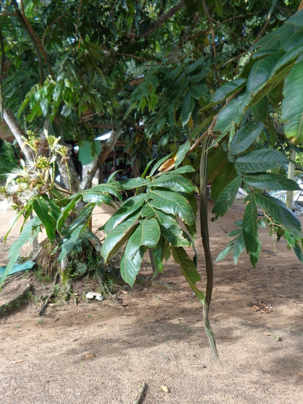 La Guyane en 2018  - Page 14 Dsc00826