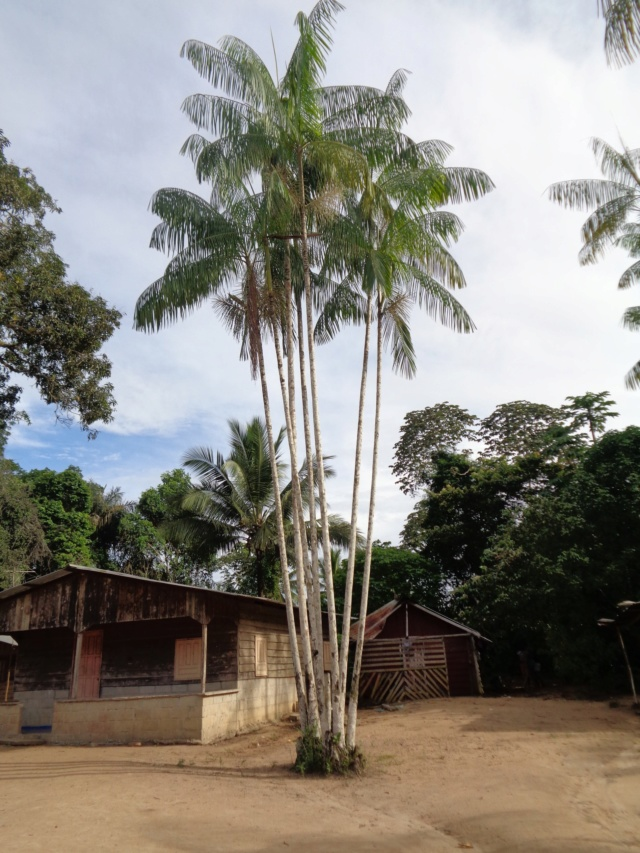 La Guyane en 2018  - Page 2 Dsc00910
