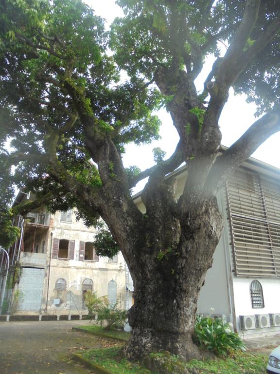 La Guyane en 2018  Dsc08613