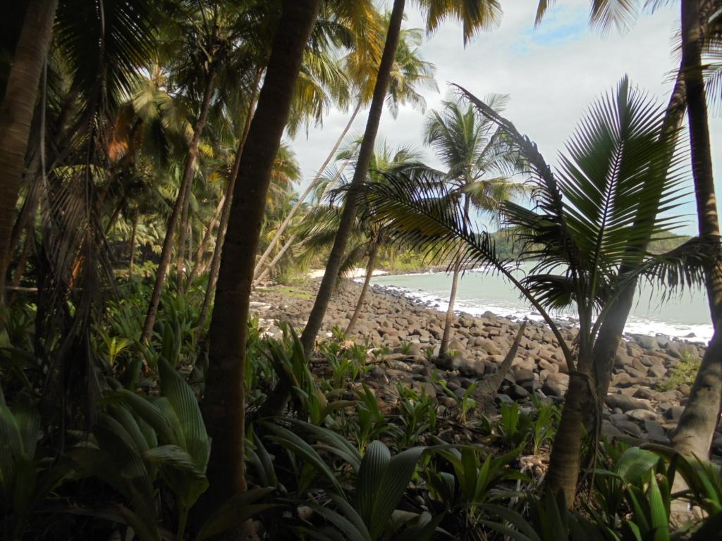 La Guyane en 2018  - Page 16 Dsc09531