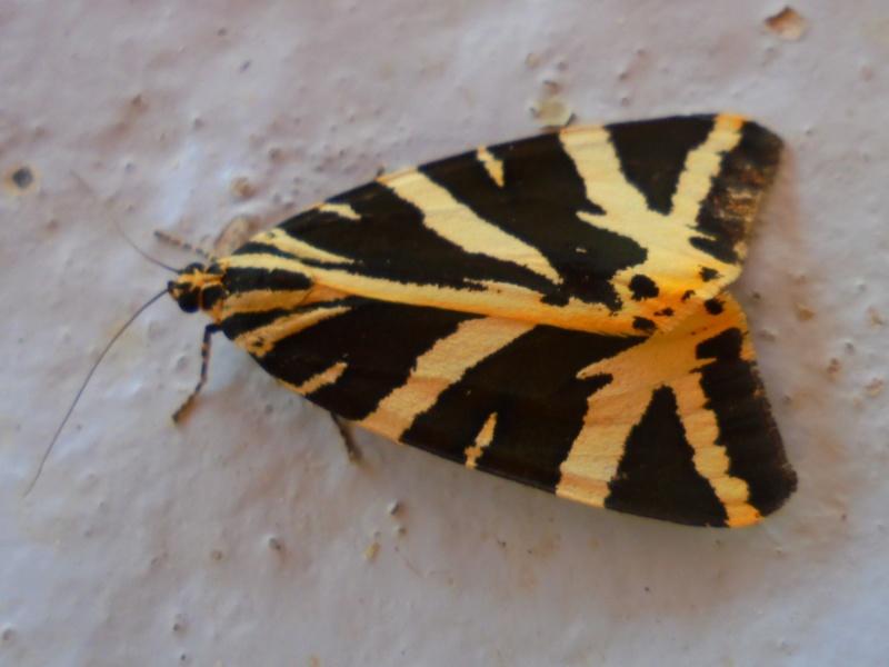 fil(et) à papillons - Page 16 Dsc09620