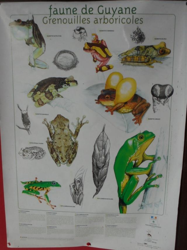 La Guyane en 2018  - Page 9 Dsc09717