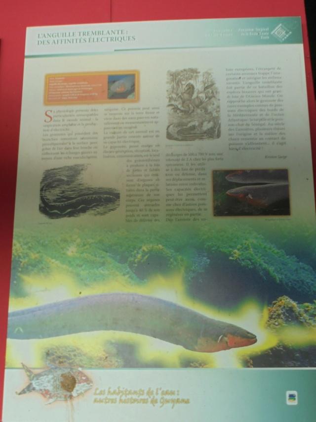 La Guyane en 2018  - Page 9 Dsc09720