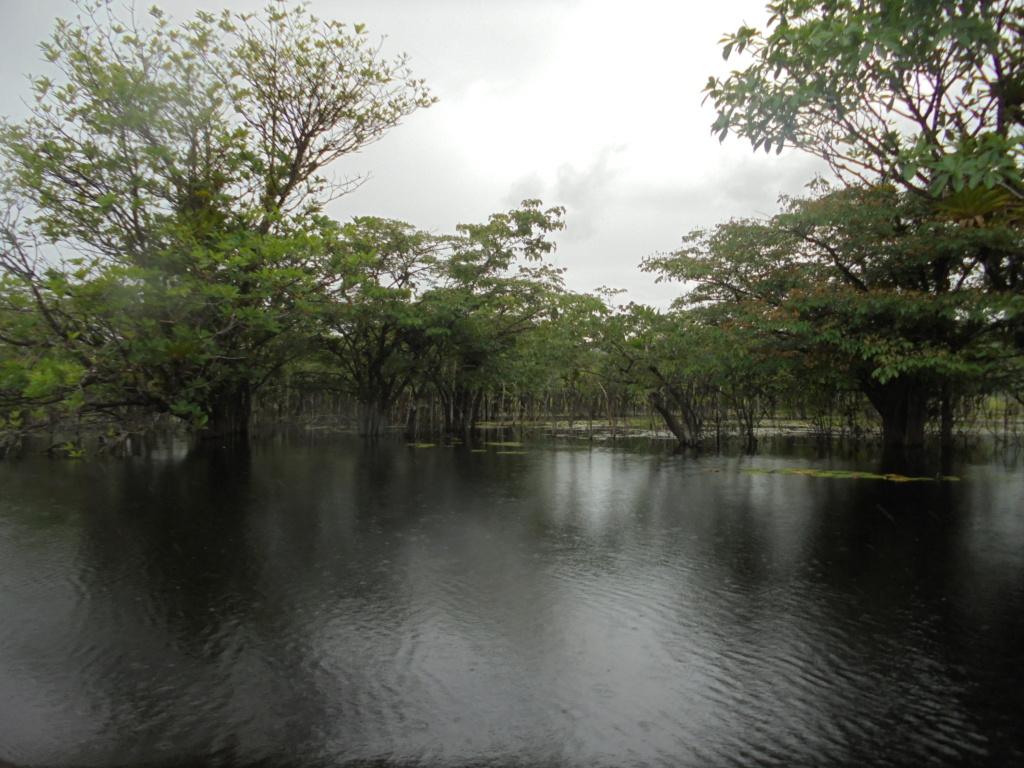 La Guyane en 2018  - Page 10 Dsc09826