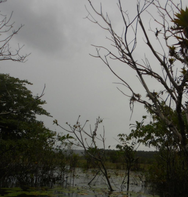 La Guyane en 2018  - Page 10 Dsc09827
