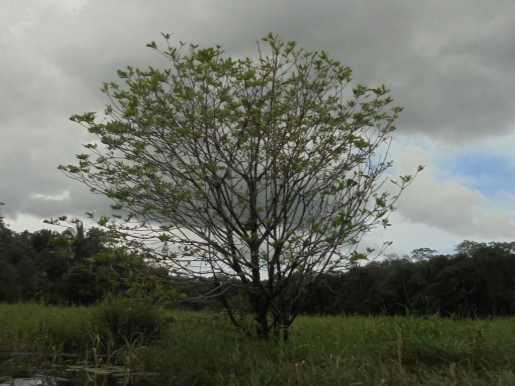 La Guyane en 2018  - Page 10 Dsc09831