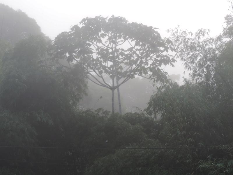 La Guyane en 2018  - Page 5 Dscn0020