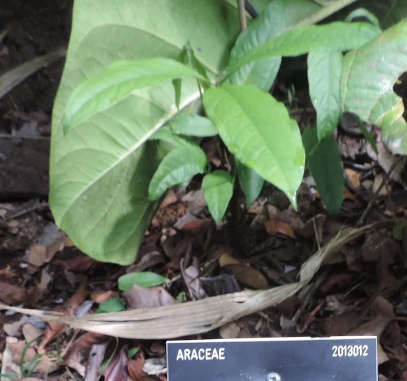 La Guyane en 2018  - Page 13 Dscn0080