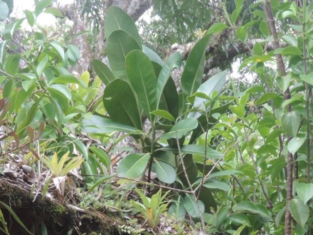 La Guyane en 2018  - Page 5 Dscn0122
