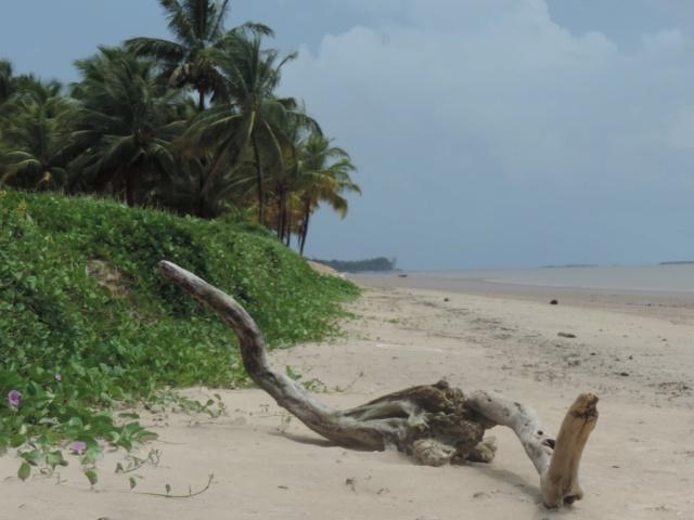 La Guyane en 2018  - Page 6 Dscn0220