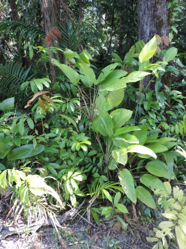 La Guyane en 2018  - Page 7 Dscn0235
